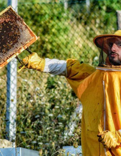 imperiale-dino-carlo-apicoltura